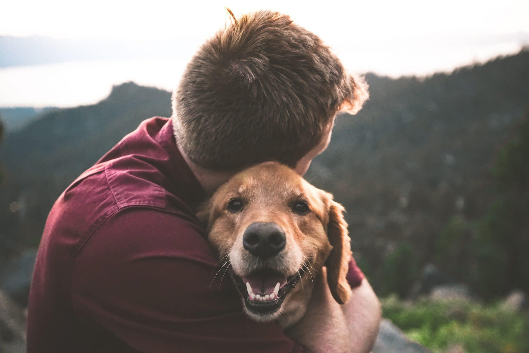 Pet owners are turning to CBD to help soothe pets